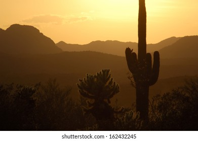 A cholla, saguaro and hills at sunset