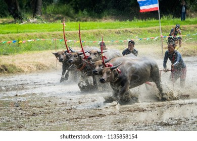 Chon Buri, Thailand - July,15, 2018 : Unidentified name farmer with the buffalos running fastest watching in the race. The event is normally held before rice planting season at Chon Buri, Thailand