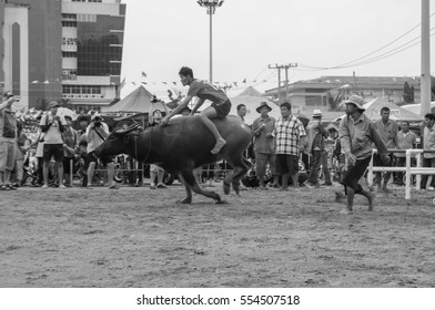 Chonburi - OCTOBER 07 : Participants buffalo racing festival runs in 143th Buffalo Racing Chonburi 2014 on October 07, 2014 in Chonburi, Thailand.