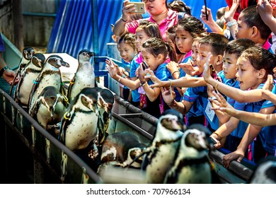 CHONBURI, THAILAND - 19 AUGUST, 2016 : Show the penguins and parade in the Khao Kheo Open Zoo, Thailand