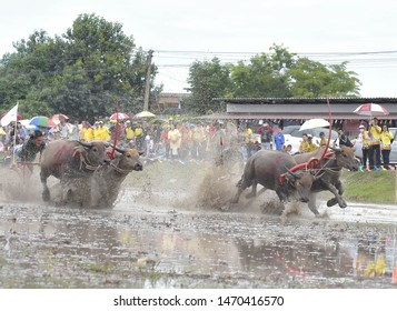 Chonburi Thailand, 21 July 2019: The farmer traditional event with Buffaloes Run Race before the rice planting season.