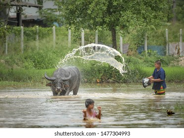 Chonburi Thailand, 21 July 2019: The boy shower animal buffalo for traditional event with Buffaloes Run Race before the rice planting season.