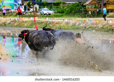 Chonburi, Thailand - July 21, 2019; Traditional activity Buffalo running race in mud field in  Chonburi Thailand