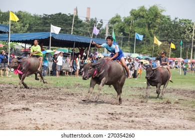 CHONBURI, THAILAND - OCT 12 : buffalo racing festival yearly on Chonburi in Thailand on October 12, 2014, Unconfident name of rider