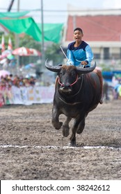 CHONBURI, THAILAND - OCTOBER 3 : Participant rides his buffalo at the annual Buffalo Races October 3, 2009 in Chonburi City, Thailand. The event attracts buffalo owners and jockeys from all over Thailand.