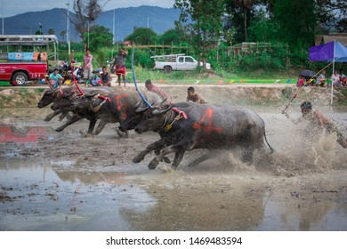 CHONBURI,THAILAND -JULY 21:Buffalo races running, Thailandl on the rice field which is held annually at Chonburi, Buffalo Racing Festival is a tradition of Chonburi province.Thailand on July 21, 2019