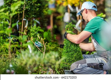 Choosing Garden Plants. Professional Landscaper Trying to Pick Right Plants For His Garden Project. Garden Store Shopping.