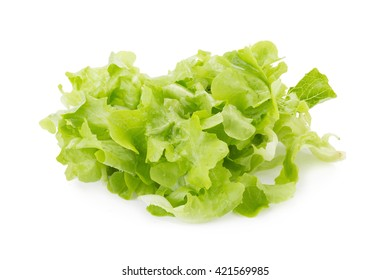 Chopped Green Oakleaf Lettuce for a Salad Isolated over White Background