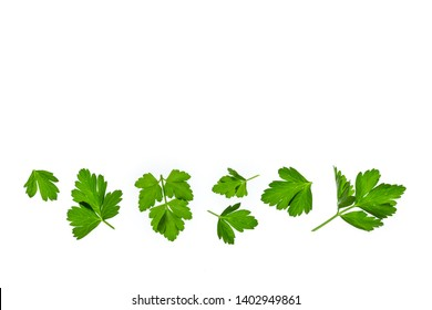 chopped parsley leaves isolated on white background with copy space above