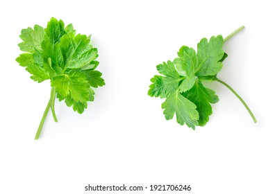 Chopped parsley leaves isolated on white background. Flat lay. Copy space above, closeup