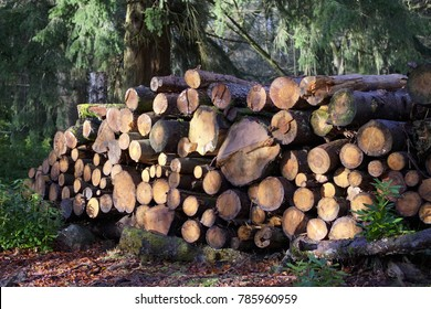 Chopped wood logs for sale use in fire place at home stored on forest woods green biomass energy