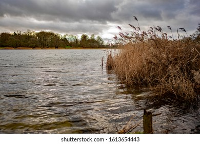 A choppy country estate lake and golden reed beds in rural Norfolk