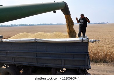 "Chortkiv - Ternopil - Ukraine - July 26, 2016. Unloading grain from the harvester hopper in the field with in the agricultural firm ""Polivtsi"""