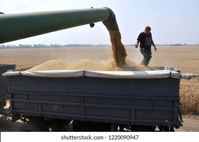 """Chortkiv - Ternopil - Ukraine - July 26, 2016. Unloading grain from the harvester hopper in the field with in the agricultural firm """"Polivtsi"""""""