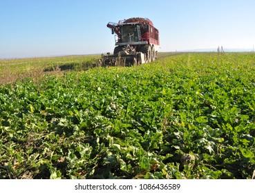 "Chortkiv - Ternopil - Ukraine - October 18, 2017. The combine Holmer collects sugar beets in the ""Nichlava"" farm in Ukraine"