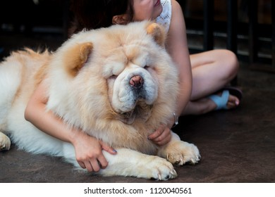 Chow Chow laid on the floor and hugged by a teenage girl