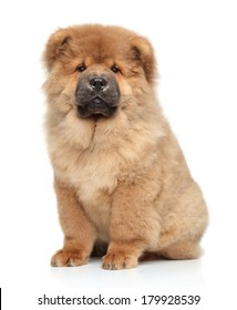 Chow chow puppy, portrait on a white background