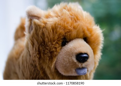 A Chow Chow puppy toy