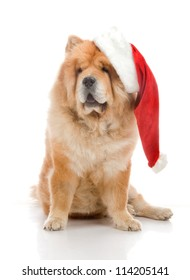 Chow-Chow in a red Santa Claus hat in studio on white background