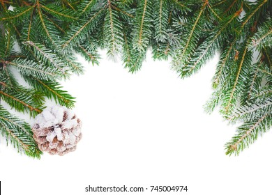 Chrismas background. Branch of a Christmas tree in frost on a white background. Copy space for text