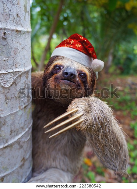 Christmas animal, portrait of a sloth wearing a santa hat