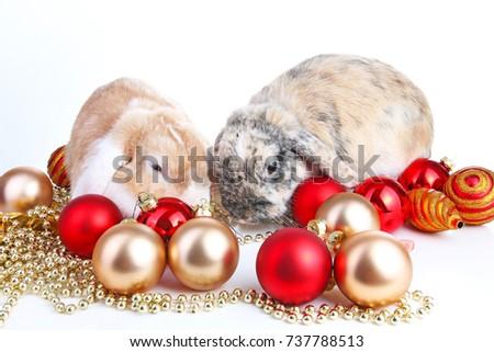 Christmas Animals Cut Lop Eared Rabbit Stock Image