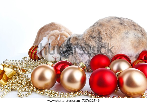 Christmas Animals Cut Lop Eared Rabbit Stock Photo Edit Now
