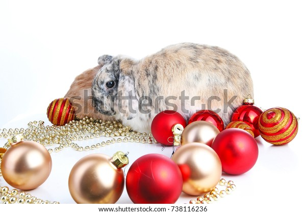 Christmas Animals Cut Lop Eared Rabbit Royalty Free Stock