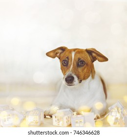 Christmas background with cute jack russell resting in holiday garland. New year concept.