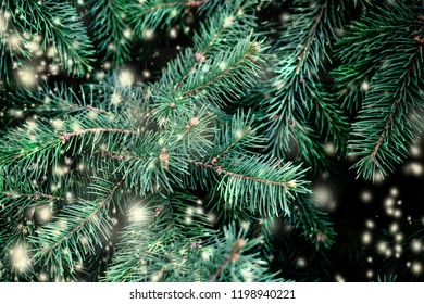 Christmas Background with falling white  snow and fir tree branches. Merry Christmas Festive Card. Copy space.