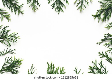 Christmas background: Green cypress twigs on white background. Copy space.