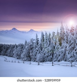 Christmas background with snowy fir trees and mountains in heavy blizzard at sunrise.