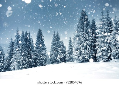 Christmas background with snowy fir trees and heavy snowfall