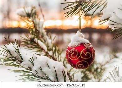 Christmas ball hanging on Christmas tree in forest at sunset