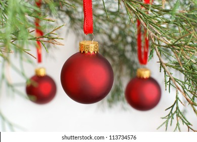 Christmas baubles hanging on a Cedar tree branch