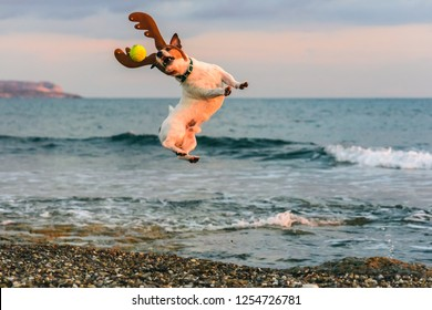 Christmas at beach concept with dog wearing reindeer's antlers playing with ball
