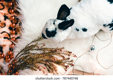 christmas bunny or rabbit. cute pet. animal plays with toys. light flicker of garlands. hare black and white, rex.