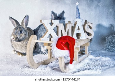Christmas bunny with sled and snow