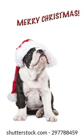 Christmas card with an english bulldog puppy wearing Santa's hat on a white background with the text merry christmas