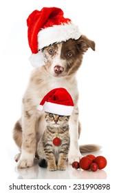 Christmas cat and dog