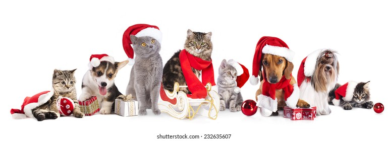 dog and cat christmas pictures