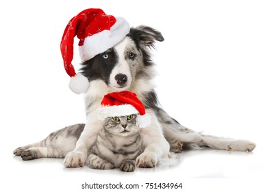 Christmas cat and dog isolated on white