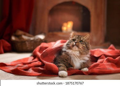 Christmas cat on a red plaid at home. Cute striped pet by the fireplace on holiday