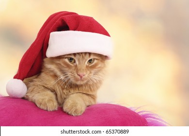 christmas cat relax on pillow isolated on light background