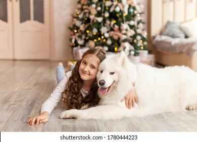 Christmas Child girl hug dog Samoyed. Christmas, winter and people concept. Christmas greeting card. Happy New Year. New Year at home
