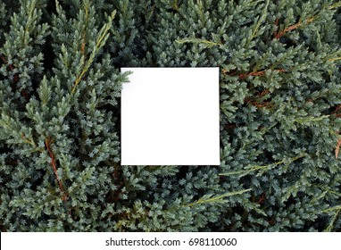 Christmas concept - mock up with evergreen background. Flat lay, top view.
