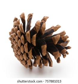 Christmas decor,  pine cone on white background.