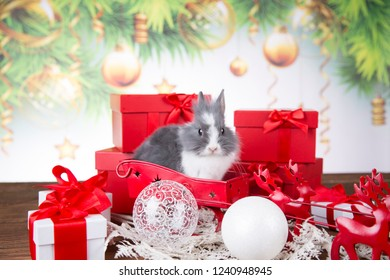 Christmas decoration, Christmas Rabbit and gifts, Santa's sleigh and reindeers, baubles and Christmas tree.