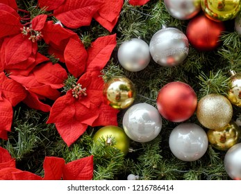 Christmas decoration with silver, golden and red Christmas balls, on the left the flowers of poinsettias, all on fir branches