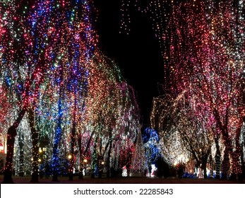 Christmas decorations outdoors - lights on trees night